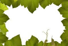 Grape vine frame isolated with white Stock Photography
