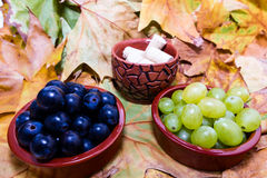 Grape for vine Stock Photography