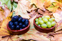 Grape for vine Stock Images