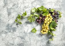 Grape vine with green leaves stone background Royalty Free Stock Photography