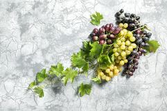 Grape vine green leaves Food background. Grape vine with green leaves. Food background Stock Photography