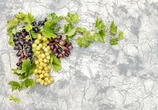 Grape vine with green leaves stone wall background. Grape vine with green leaves on stone wall background stock photos