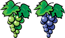 Grape vine illustration Royalty Free Stock Images