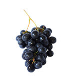 Grape vine isolated. One blue grape vine isolated in the white stock image