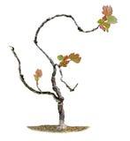 Grape vine isolated on white Stock Image
