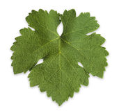 Grape Vine Leaf Stock Photos