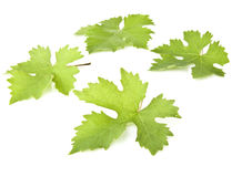 Grape Vine Leaves Royalty Free Stock Photo