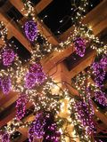 Grape Vine Lights. Christmas lights formed in the shape of a grape vine at Bellevue Botanical Gardens Stock Photo
