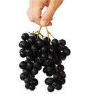 Grape vine in a nahd. Grape vine in a hand isolated on the white Royalty Free Stock Photography