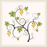 Grape vine tree. Royalty Free Stock Photo