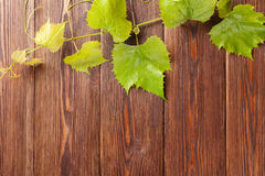 Grape vine on wooden table Stock Image