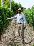 Grape vine worker stock photography