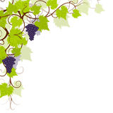 Grape vines background frame. Royalty Free Stock Image