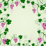 Grape vines background frame. Stock Photography