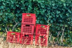 Grape Vines baskets Royalty Free Stock Photo
