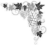 Grape vines Royalty Free Stock Image