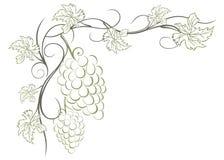 Grape vines stock illustration