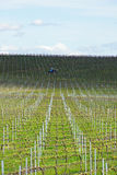 Grape vines being prepared for growing in Australia with farming tractor, clouds, shadows and sky in the background. Stock Images