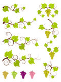 Grape vines design elements set.