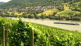 Grape vines growing in a vineyard with train and tanker ship sailing on the River Rhine, Germany. RHINE VALLEY, GERMANY – AUGUST 02 2017: 4K video clip of stock footage