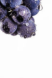 Grape vines isolated , water drops ,macro shot , black backgroun. D , ideal grapes bunch Stock Image