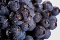 Grape vines isolated , water drops ,macro shot , black backgroun Royalty Free Stock Photos