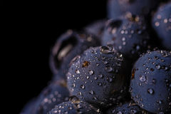 Grape vines isolated , water drops ,macro shot , black backgroun. D , ideal grapes bunch Royalty Free Stock Images