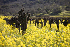 Grape Vines and Mustard Flowers, Napa Valley Royalty Free Stock Photography