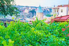 The grape vines in old Tbilisi Royalty Free Stock Photos