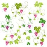 Grape vines set. Royalty Free Stock Photos