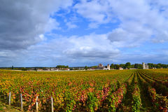 Vineyard Burgundy, France. Grape vines in a vineyard in the fall in Burgundy with colors changing Royalty Free Stock Image