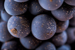 Grape vines  , water drops ,macro shot , black backgroun. D , ideal grapes bunch Royalty Free Stock Image