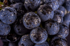 Grape vines  , water drops ,macro shot , black backgroun. D , ideal grapes bunch Stock Image