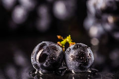 Grape vines  , water drops ,macro shot , black backgroun. D , ideal grapes bunch Stock Photography