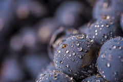 Grape vines  , water drops ,macro shot , black backgroun. D , ideal grapes bunch Stock Photo