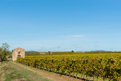 Grape vines in wide French rural landscape Royalty Free Stock Photography