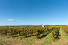 Grape vines in wide French rural landscape Stock Photo