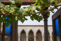 Grape vines windows Stock Photo
