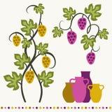 Grape vines and wineglasses set. Stock Image