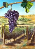 Grape and vineyard. Suitable for wine labels. My original hand painted illustration Stock Photo