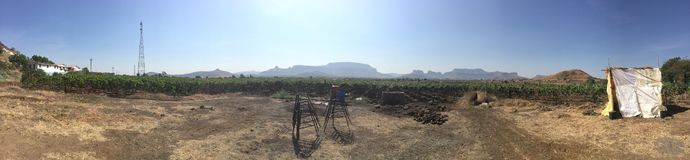 Grape vineyard plantation royalty free stock photo