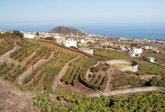 Grape vineyards Royalty Free Stock Images