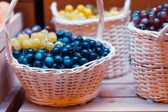 Grape vintage background Stock Image