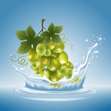 Grape in water splash. Ripe fresh bunch of grape with water splash on blue background. Vector illustration Royalty Free Stock Images