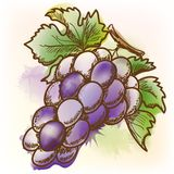 Grape, watercolor painting Royalty Free Stock Image