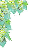 Grape on white background Stock Photos