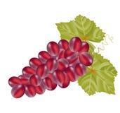 Grape on white background card Royalty Free Stock Photos