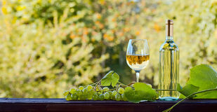 Grape and white wine. Green grape and white wine in vineyard Royalty Free Stock Photo