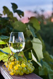 Grape and white wine in vineyard Royalty Free Stock Photos