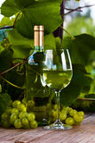 Grape and white wine in vineyard Royalty Free Stock Photography